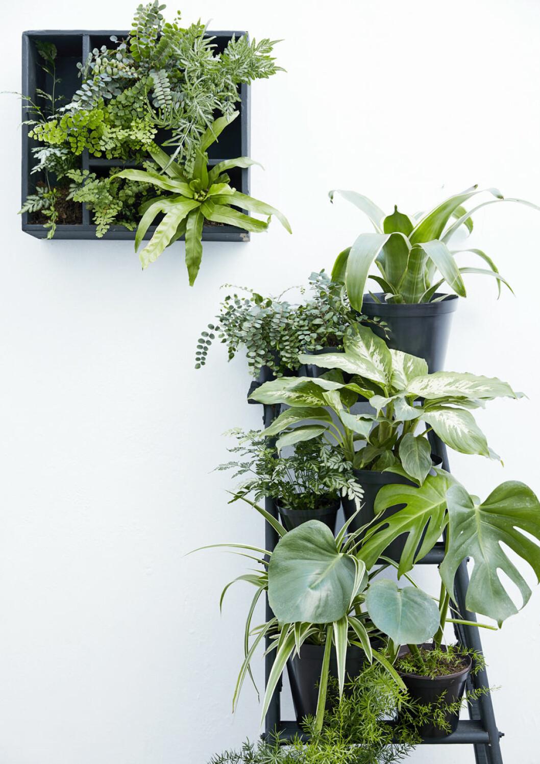 Häng växterna på väggen för en snygg hängande trädgård