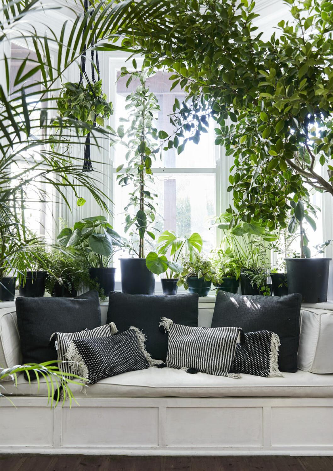 Dagbädd med en inramning av växter i alla dess former