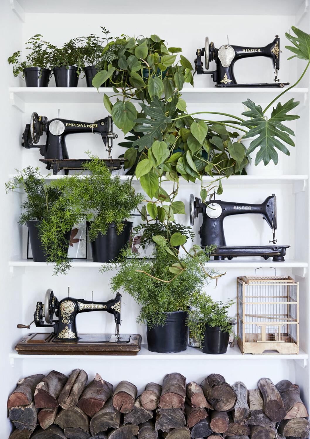 Växter som inredningsdetalj, här bland en samling av gamla symaskiner