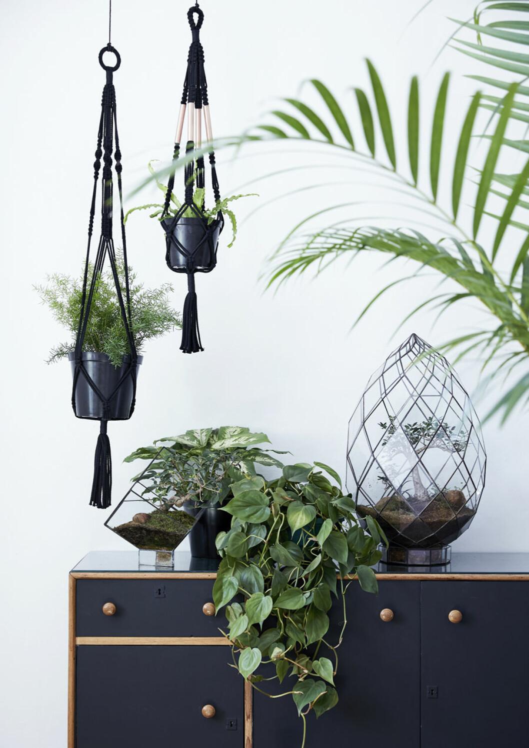 Häng växter från taket, ställ på bord och ha på golvet för ett maxat intryck