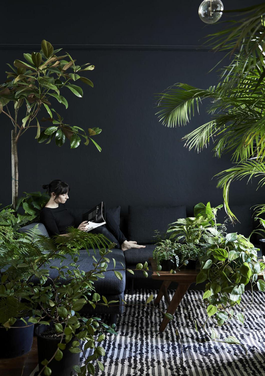 Inred med växter mot en mörk bakgrund för snygg kontrast