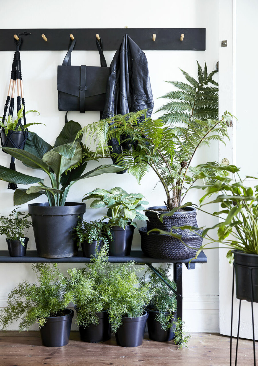 Växter i olika storlek och utförande i hallen, både på golvet och bänken