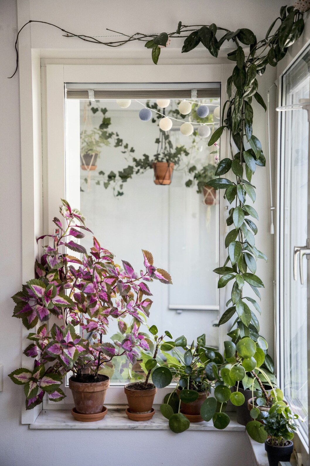 palettblad, elefantöra och klängväxter i fönstret