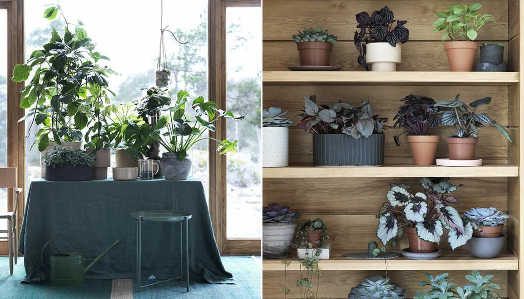inredning växter