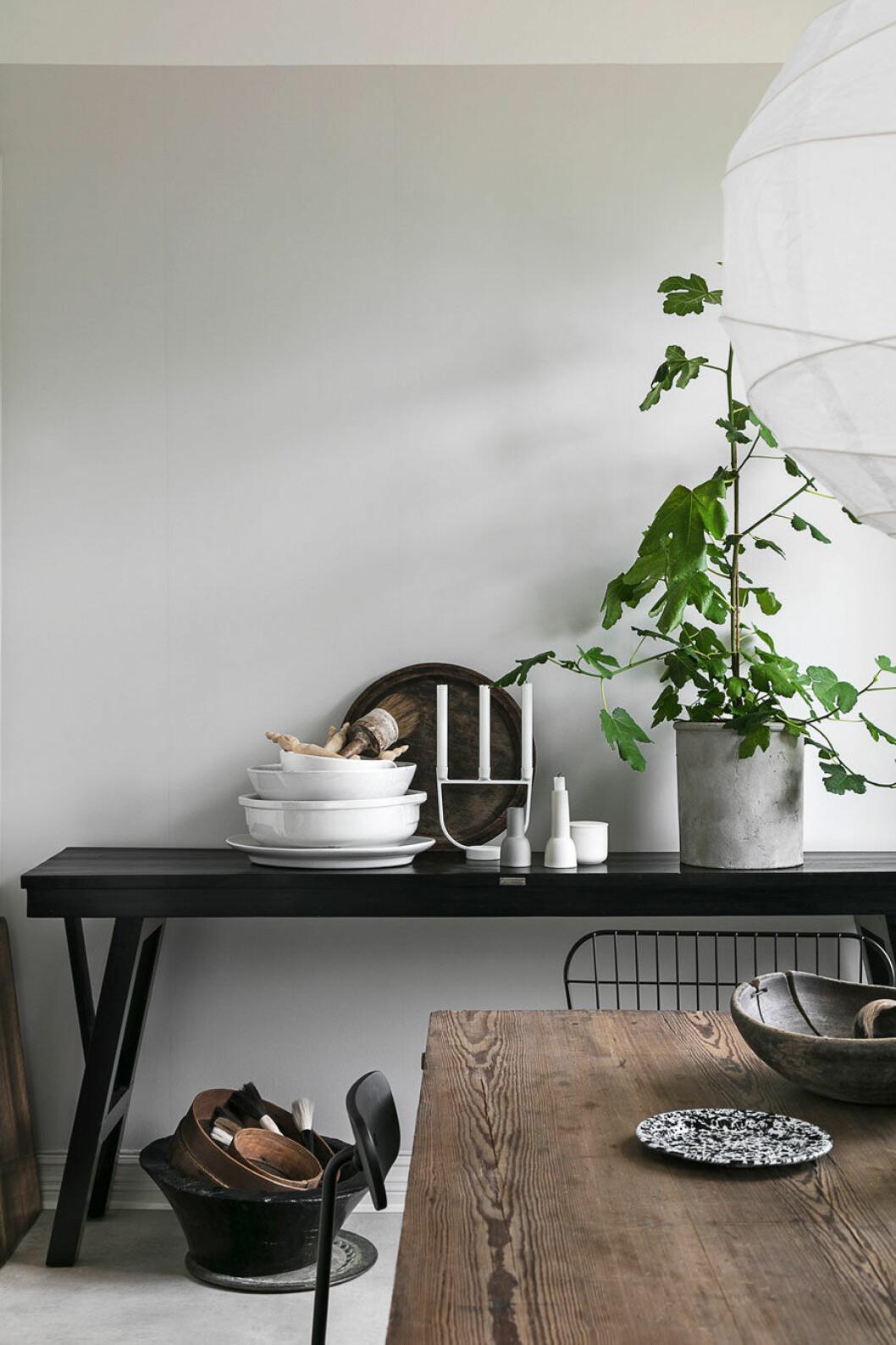 Vårda dina växter