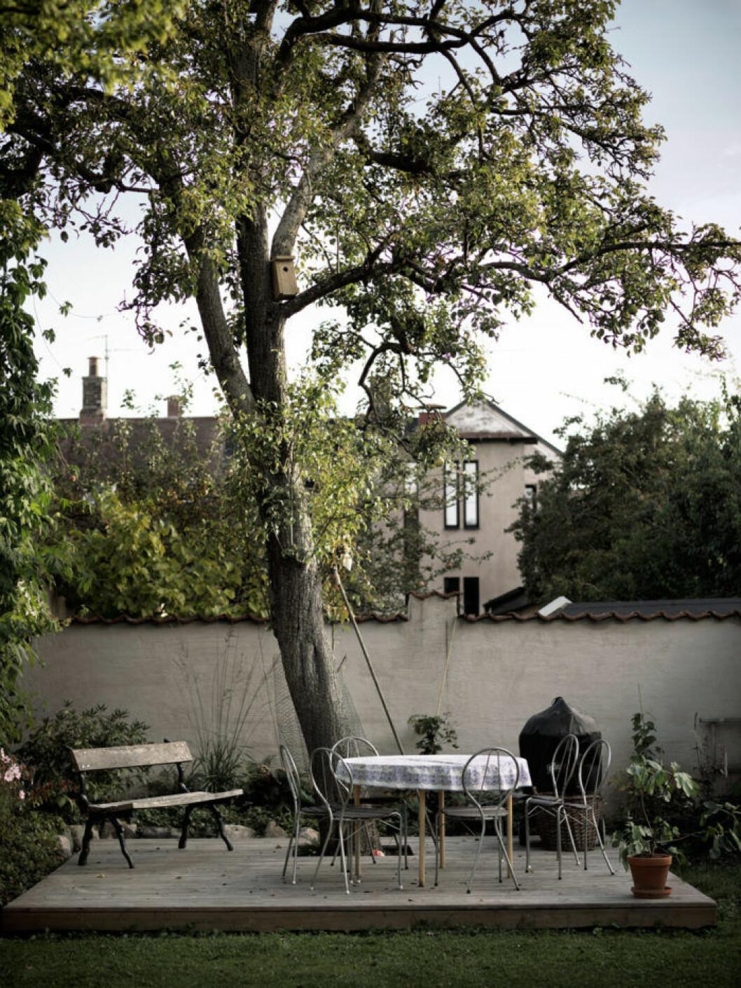 Uteplats på enkelt trädäck under stort, vackert träd