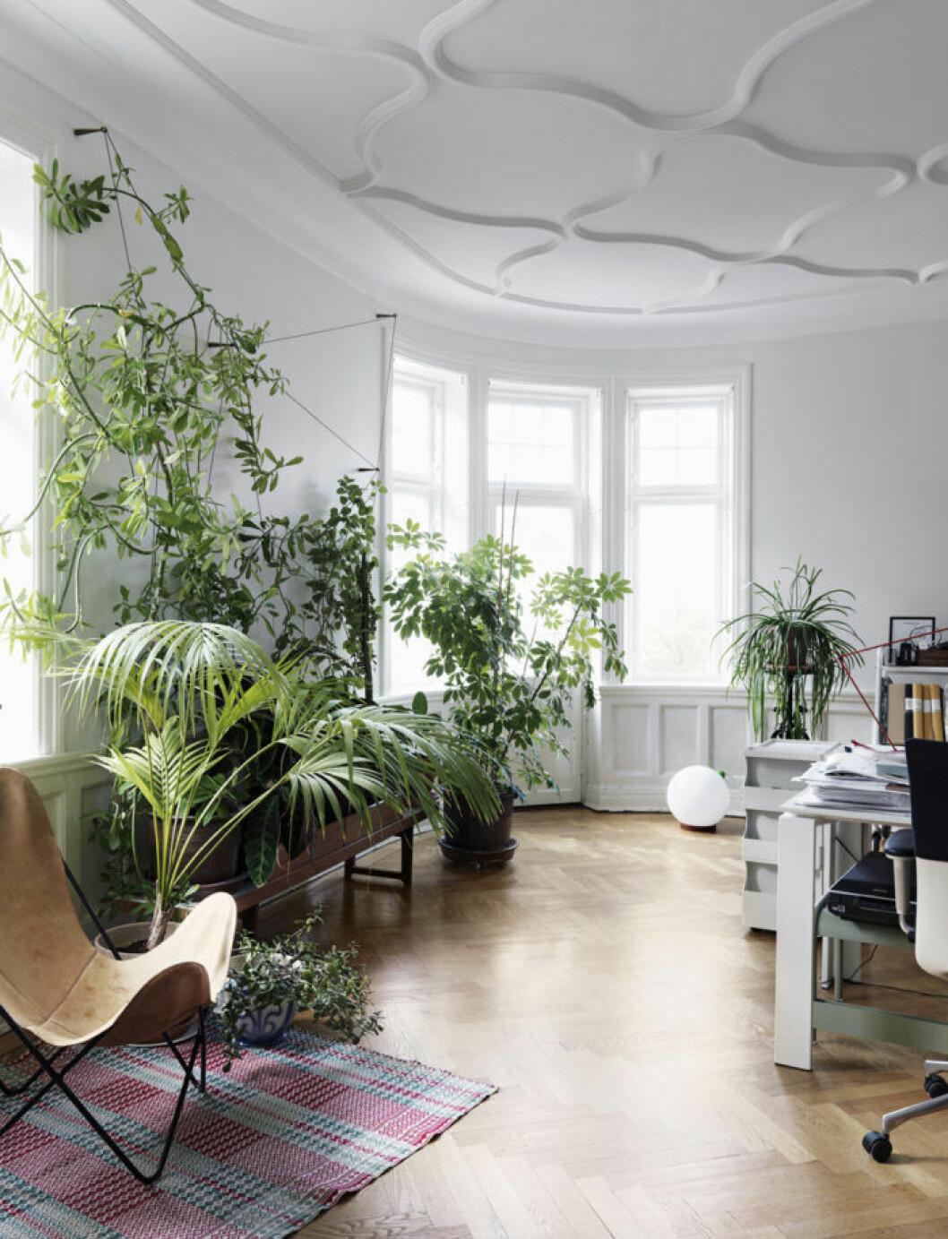 stort rum med vackra växer