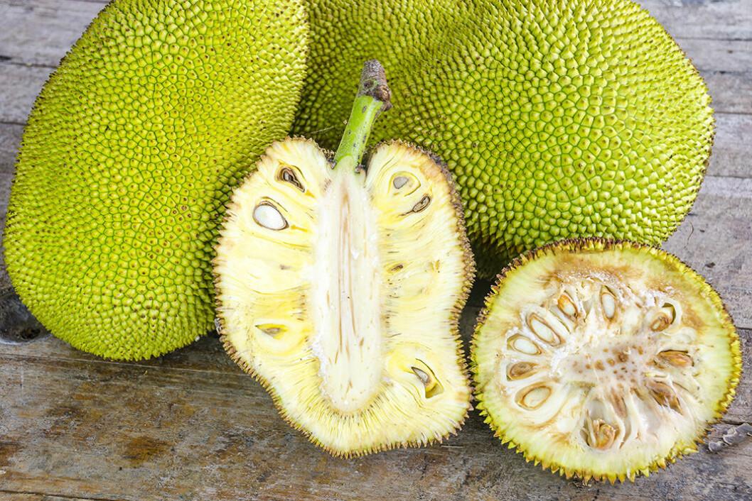Jackfruit är en av världens största frukter. Foto: IBL