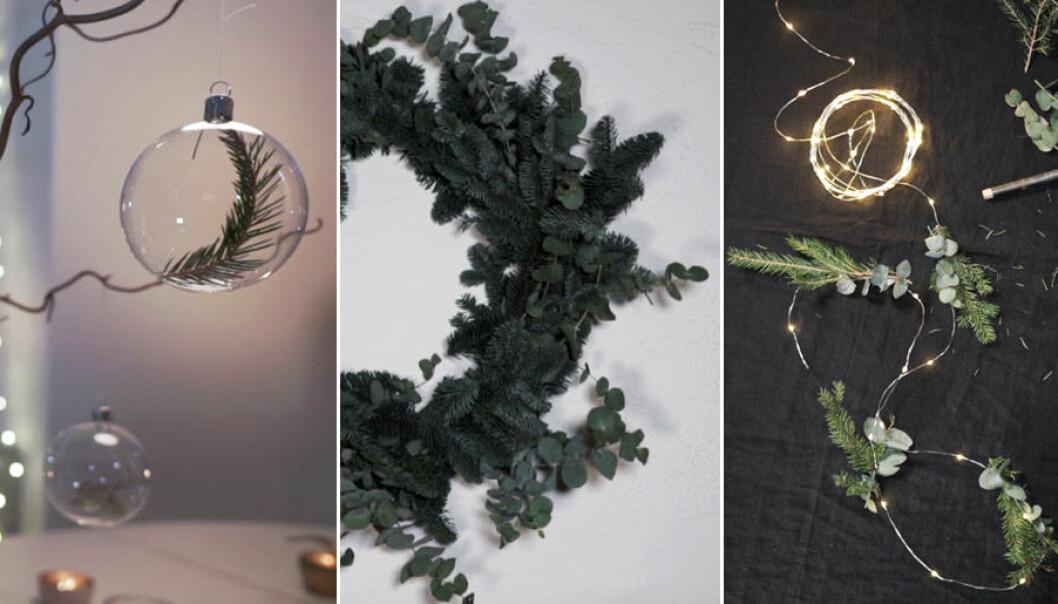 3 trendiga dekorationer med granris och eukalyptus