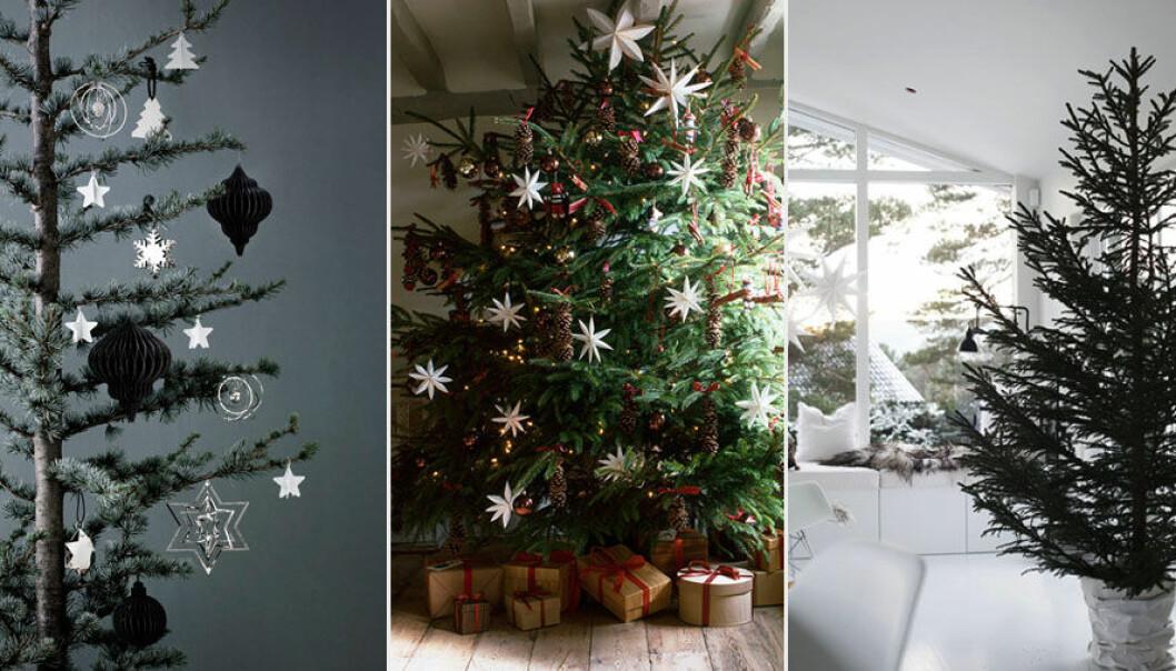 Julgran dekorerade i olika stilar