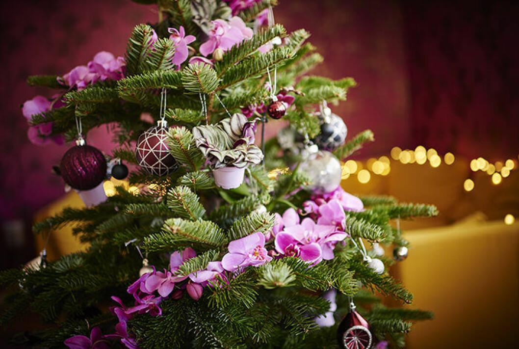 Allt fler vill dekorera med växter och blommor i julgranen.