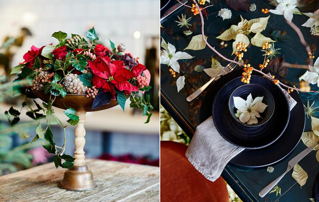 Dekorera bordet med julstjärna