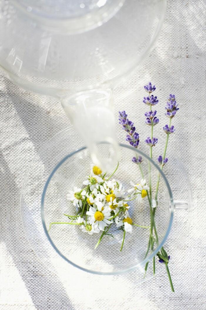 Kamomill är en ätbar blomma