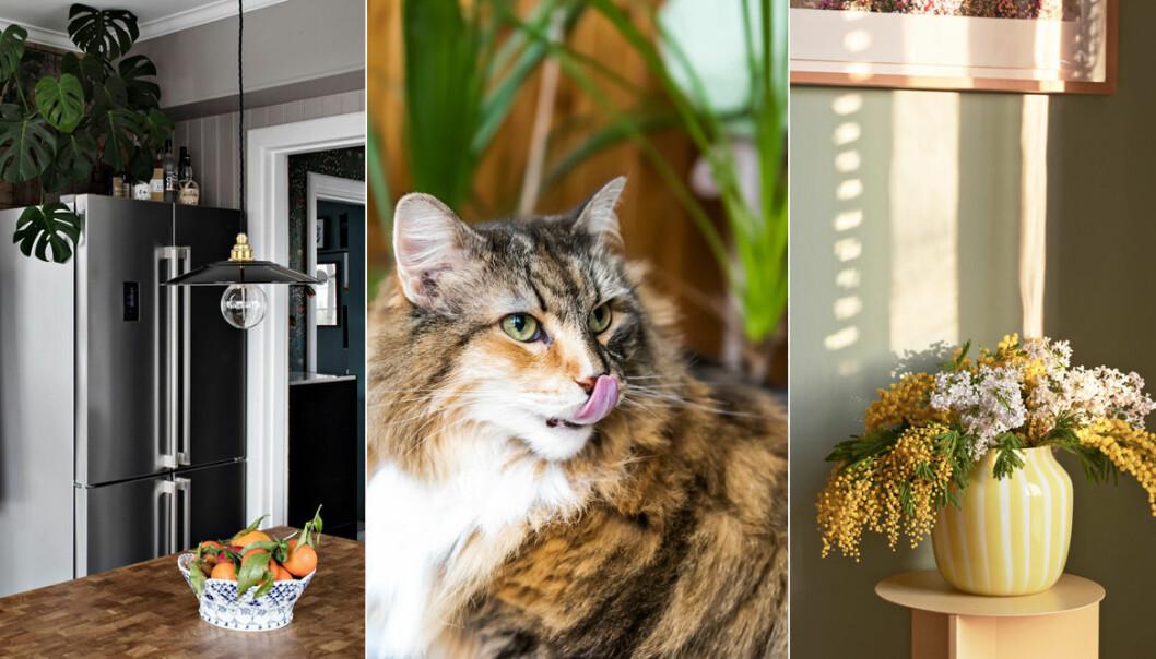 Inred kattvänligt med växter och snittblommor