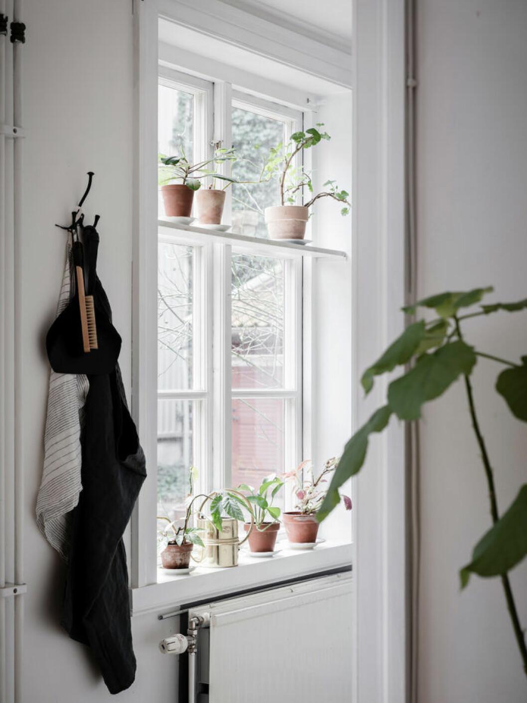 Inred kattvänligt med växter på fönsterbrädan