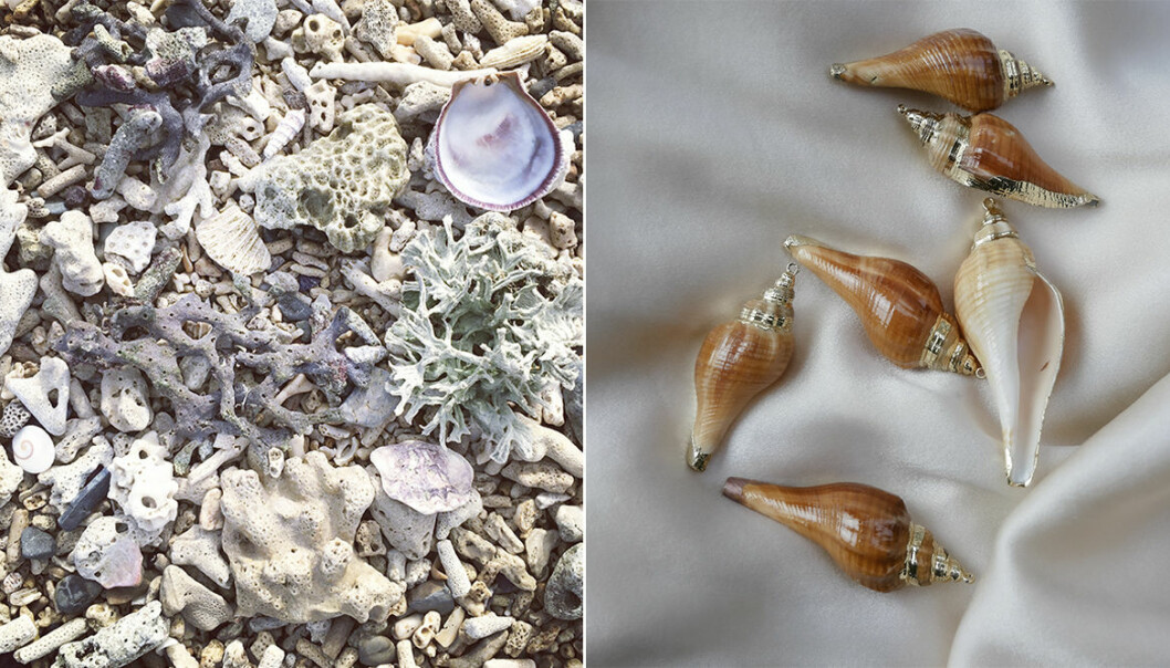 Snäckor och koraller