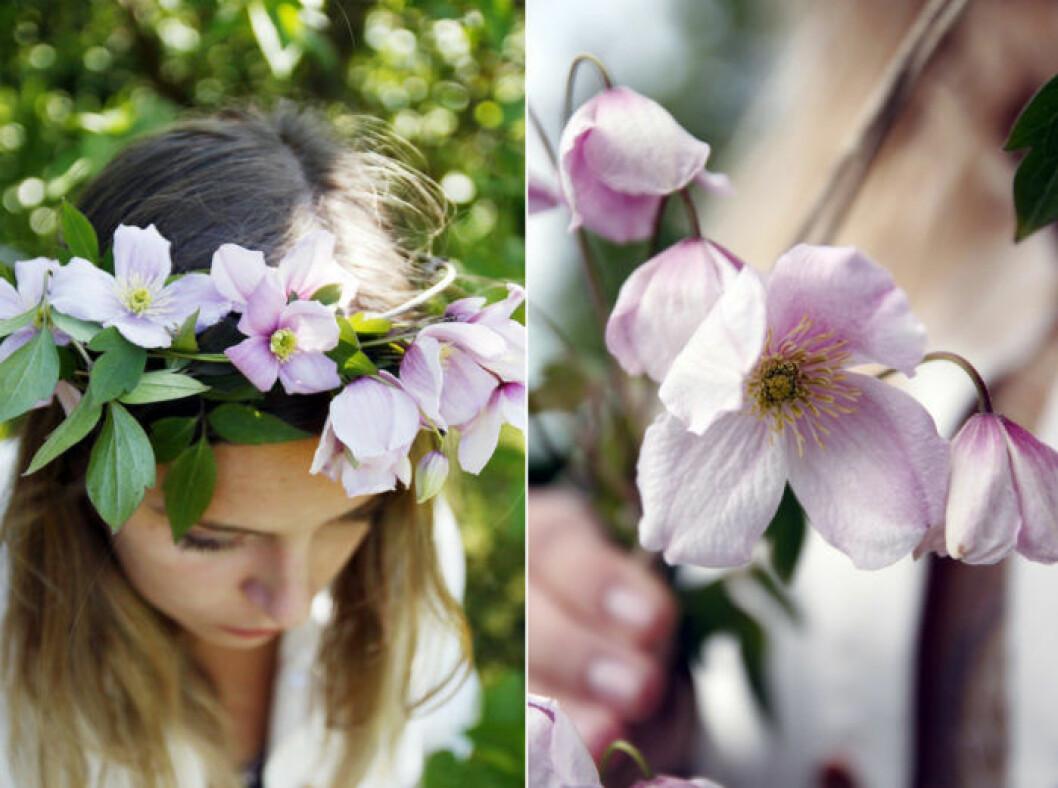krans-en-blomma