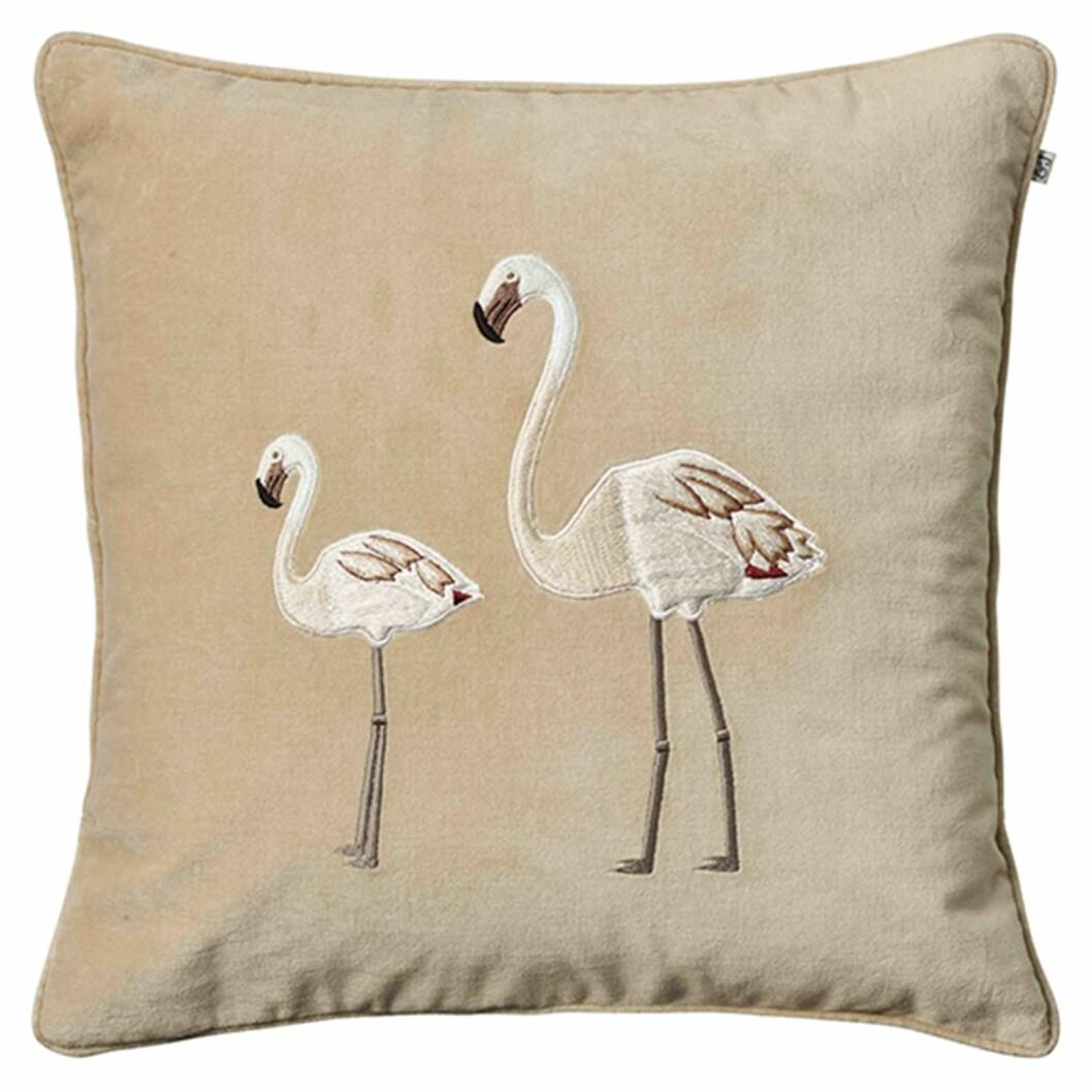 Beige kudde flamingo