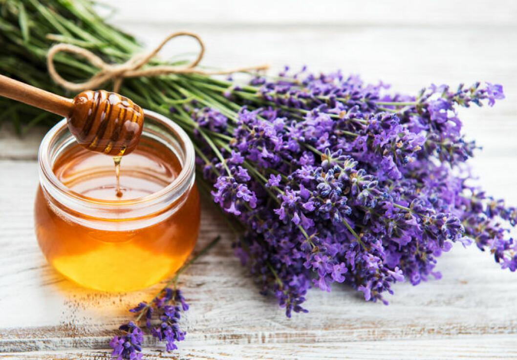 Testa att smaksätta honung med lavendel.
