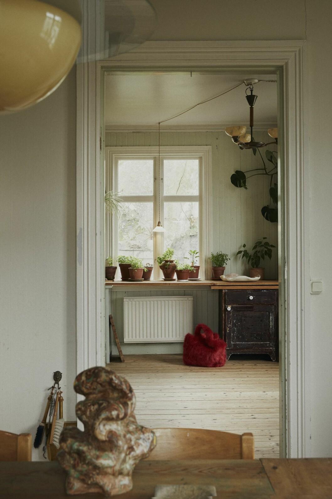 växter och förodling hemma hos malou palmqvist