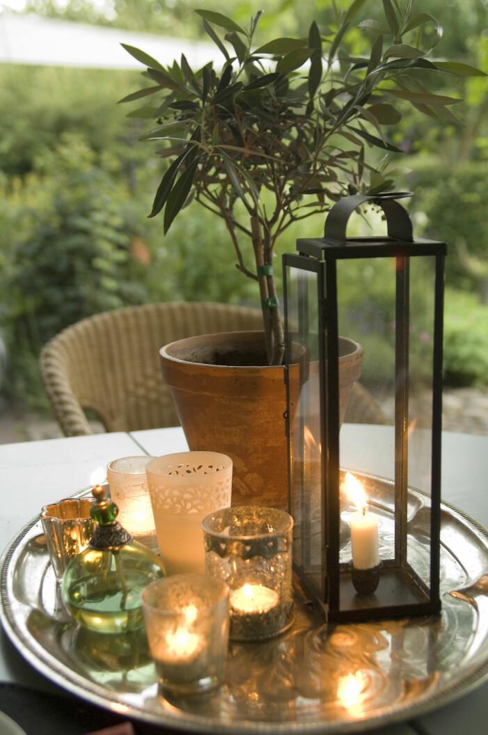 Trendiga medelhavsväxter för balkong och uteplats, olivträd