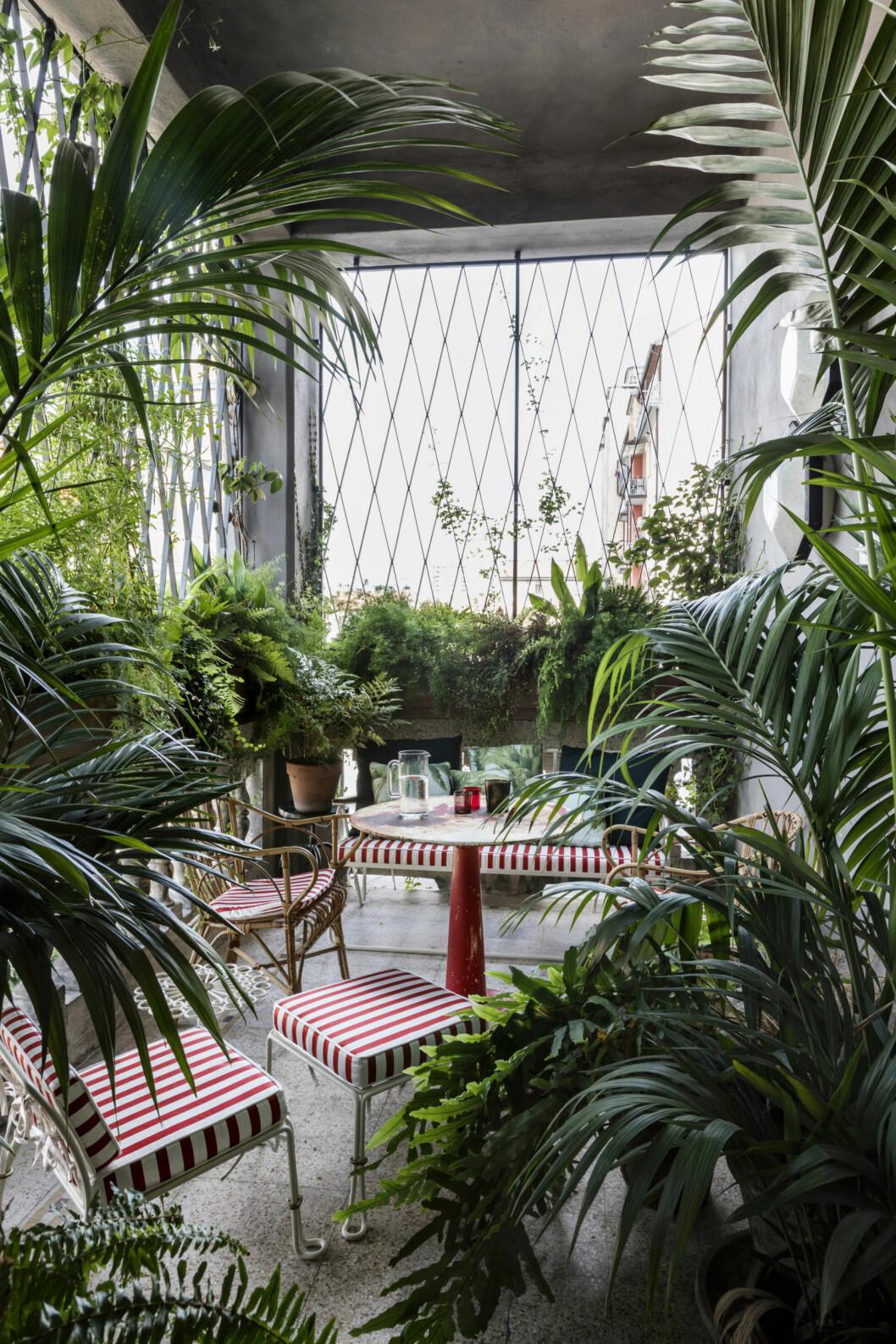 Mängder av växter i rummet som ser ut som en djungel
