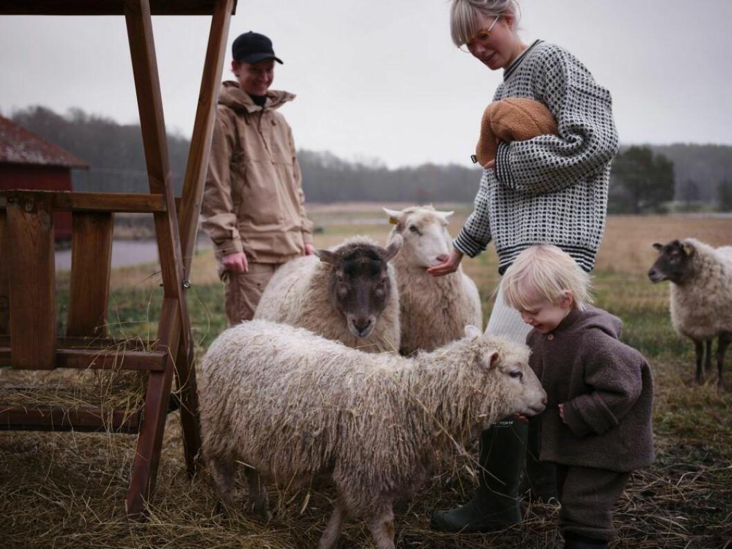 Mimmi Staaf bland får
