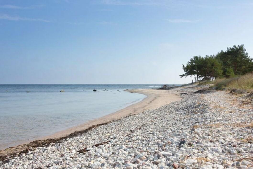 Stranden Norsta Aurar på Fårö.