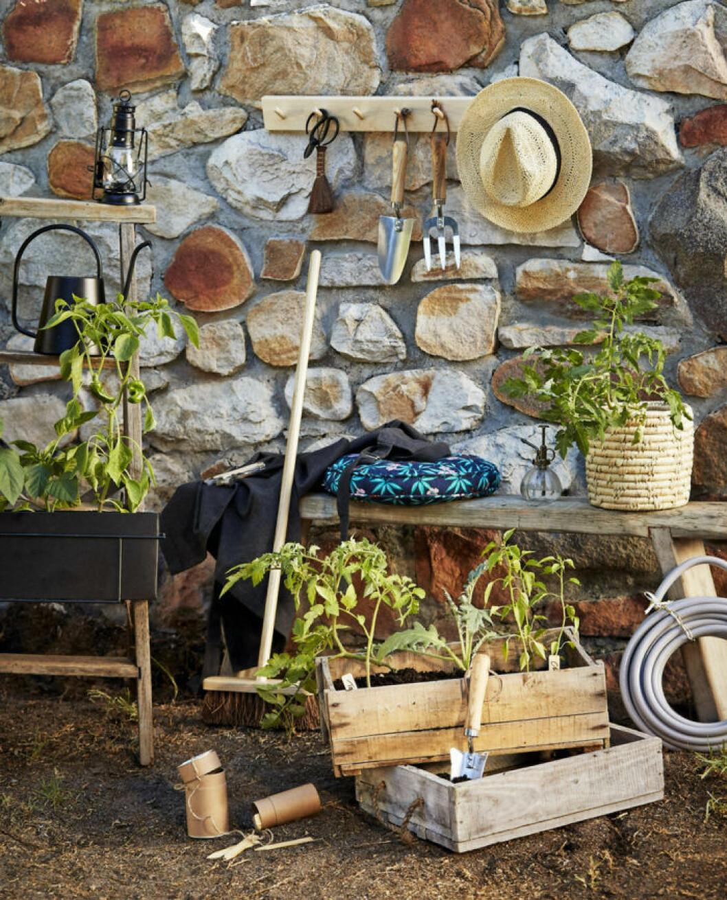 Trädgårdsförberedelser i gamla äppellådor och planteringslådor