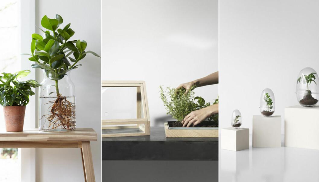 olika sätt att odla hemma