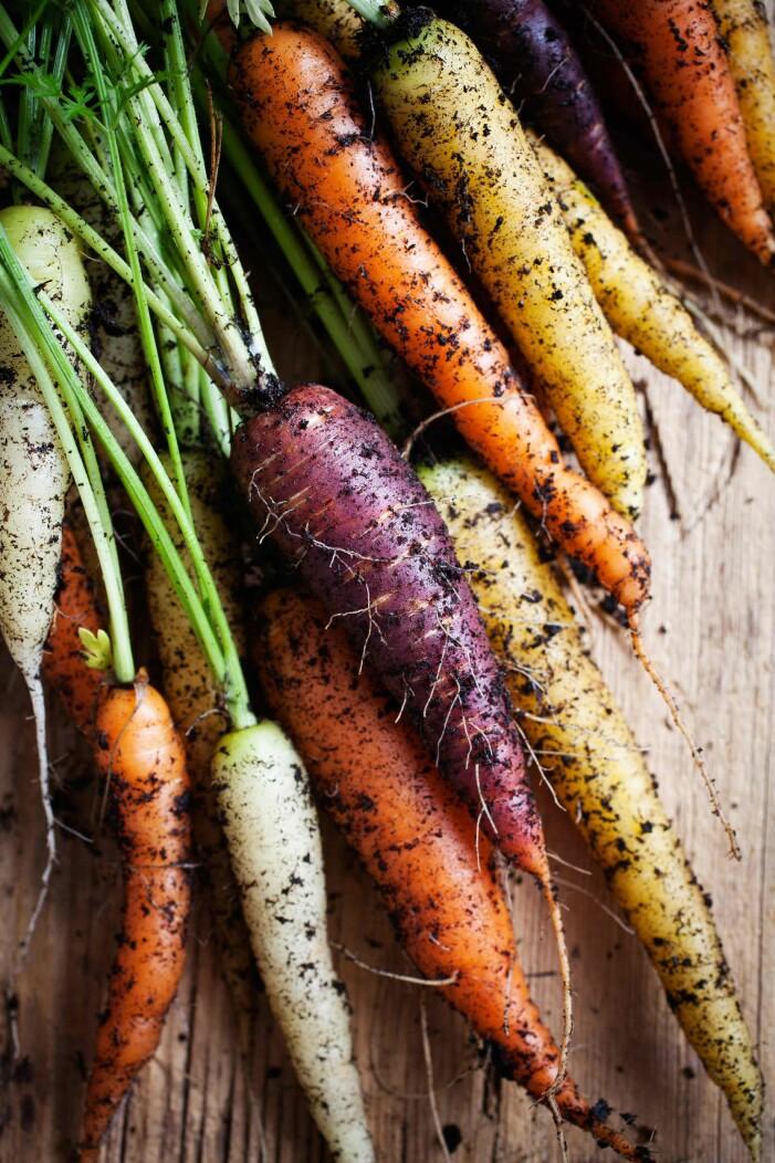 odla morötter i olika sorter