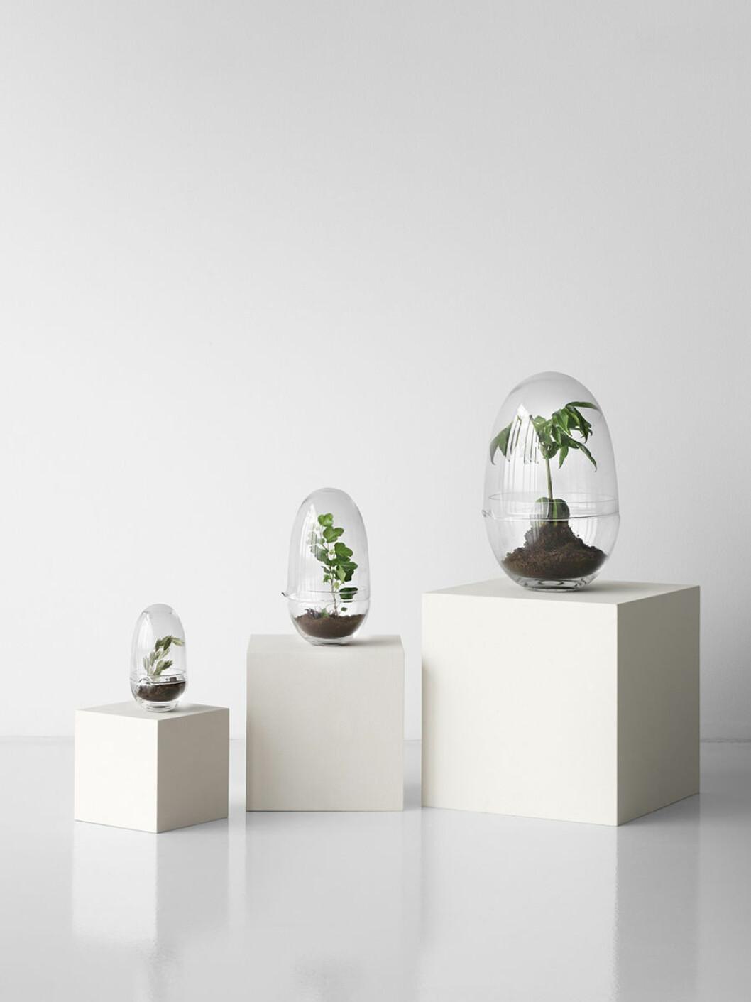 växthus i form av ett ägg