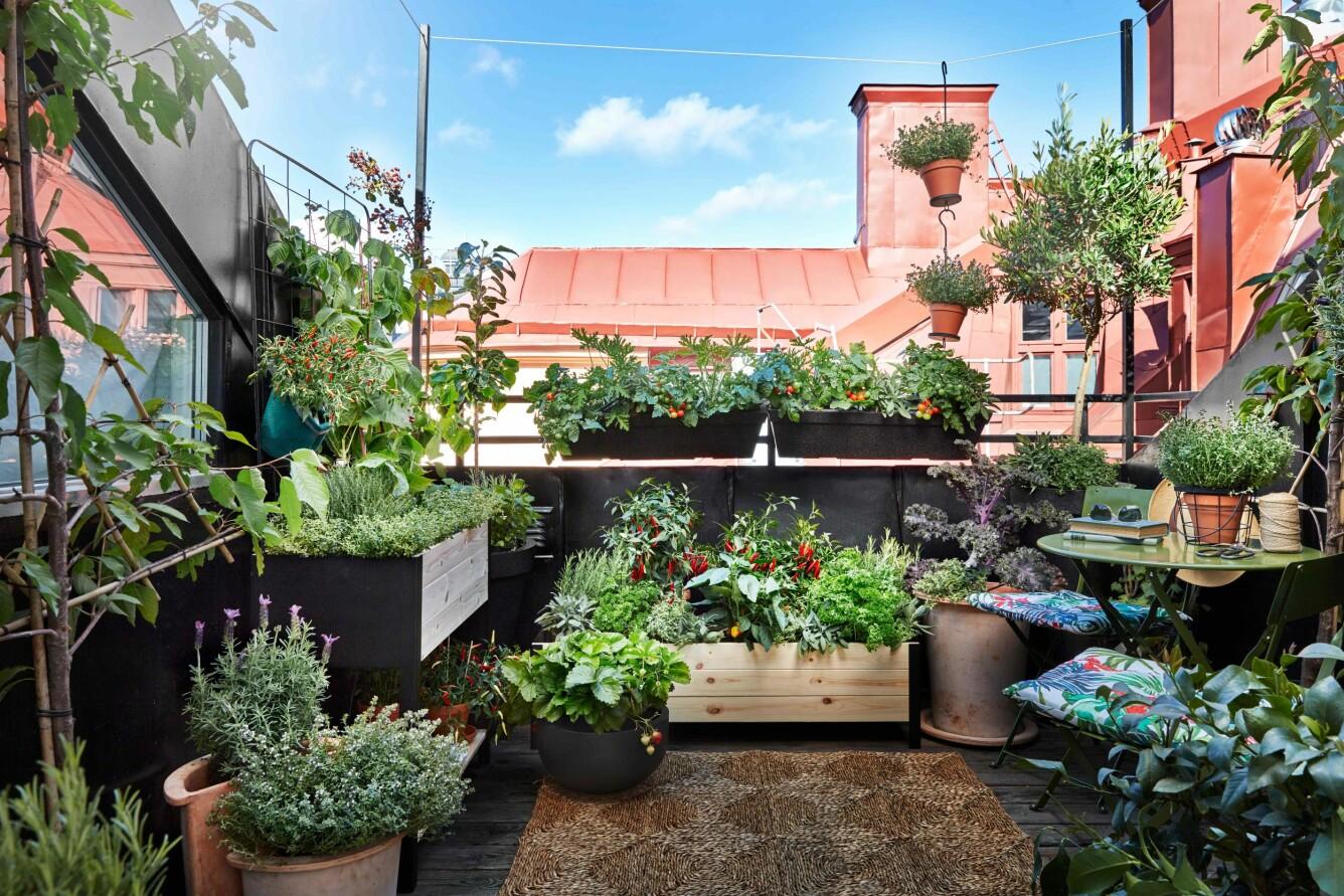 odling och plantering året runt