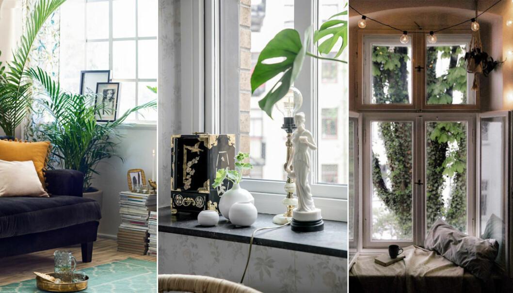olika sätt att styla fönster och fönsterbrador