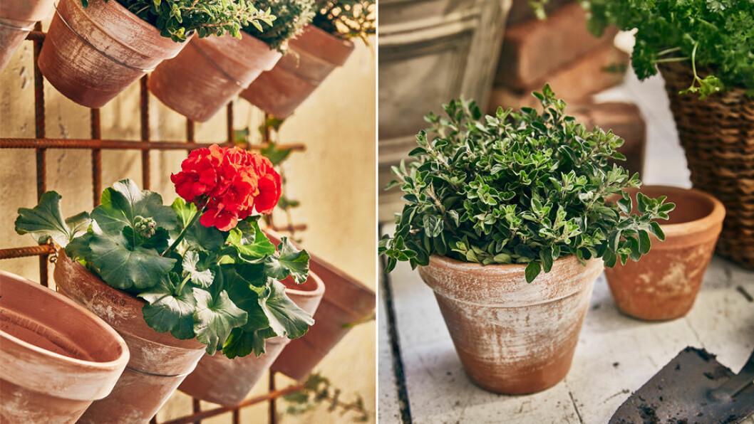 patinerade krukor med växter i