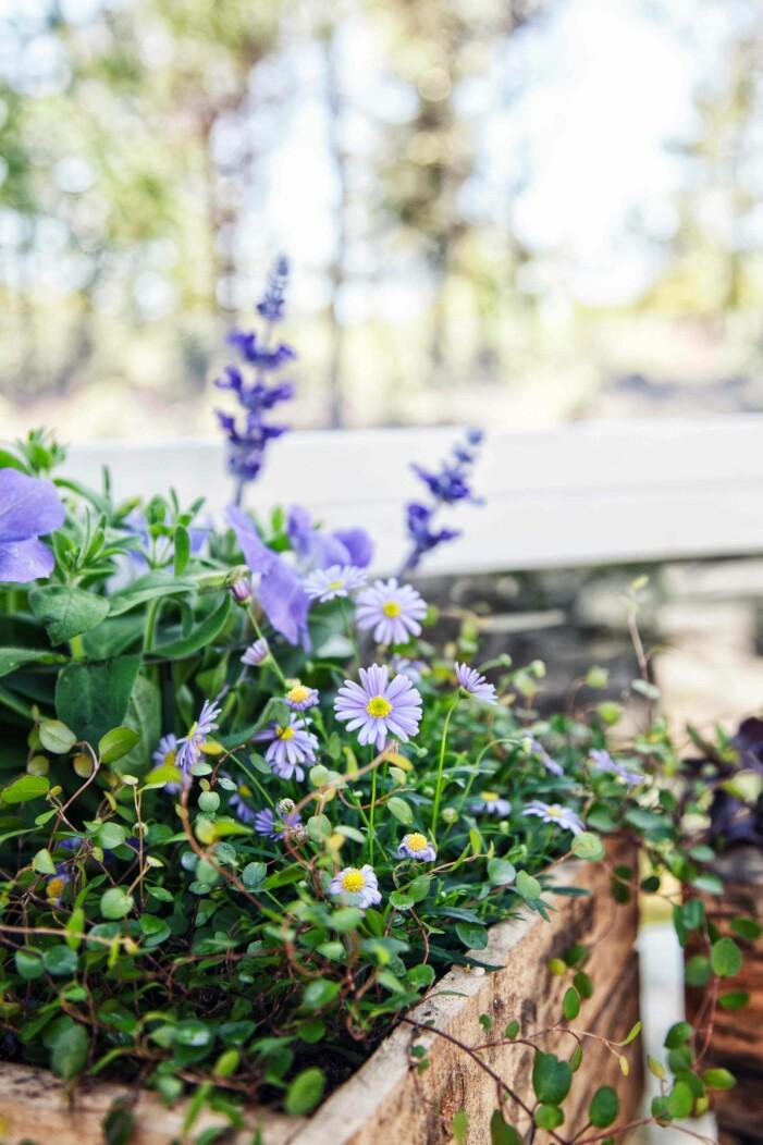personliga planteringar med mycket färg