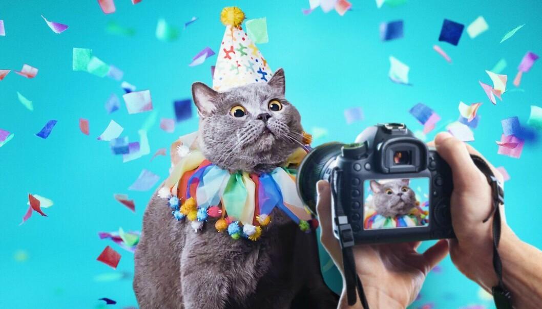 en katt blir fotograferad i Pet Stars på Netflix
