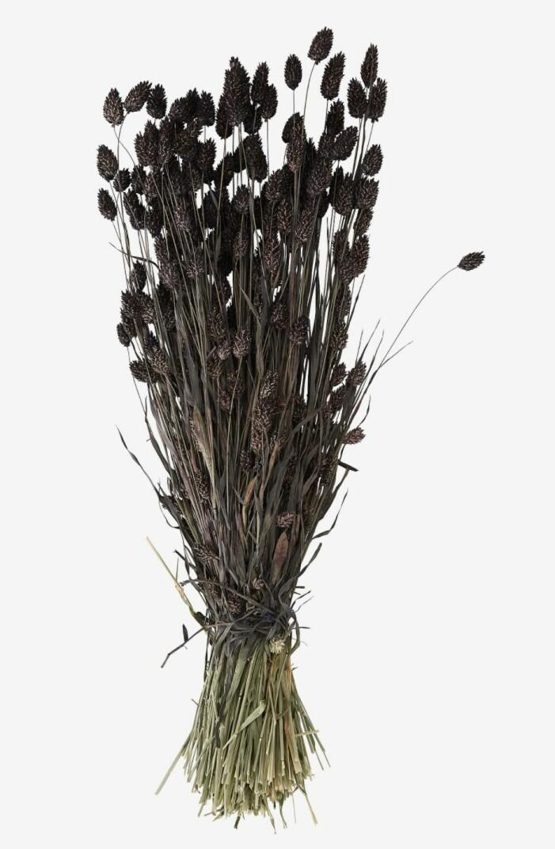 phalarisgräs från House f flowers
