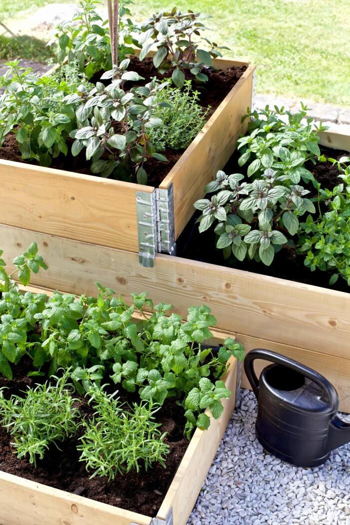 plantera kryddor och grönsaker i pallkragar