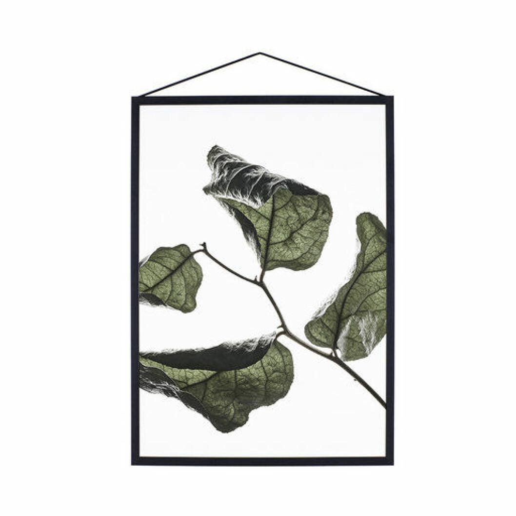 Poster med löv från Moebe