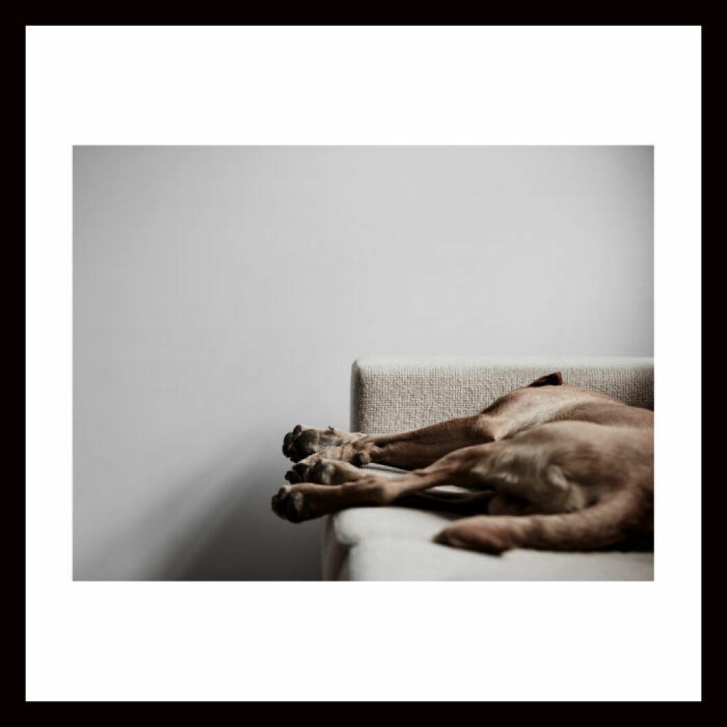 Poster på sovande hund.