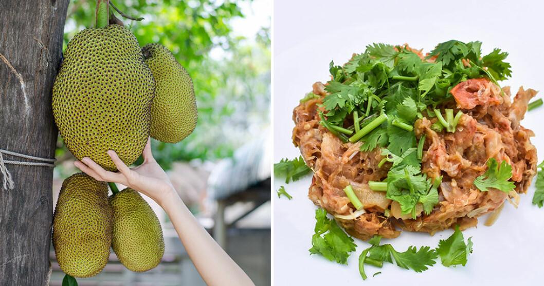 Jackfruit påminner om pulled pork när man tillagar det.