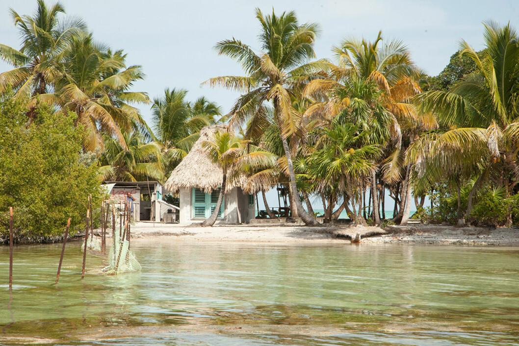 Leonardo DiCaprios Blackadore Cay i Belize.