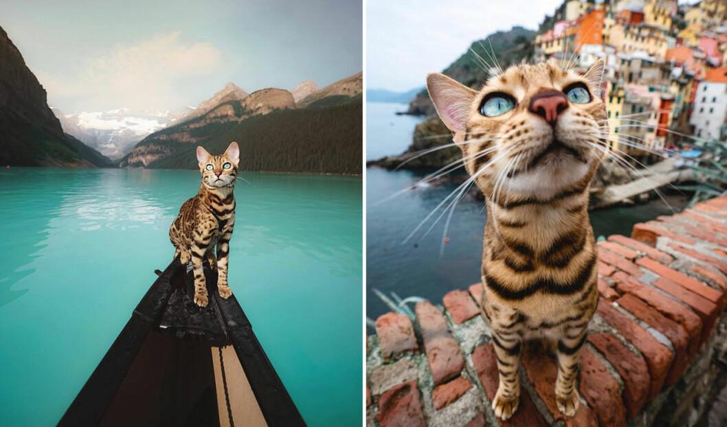 Katten Suki är en riktig äventyrare!