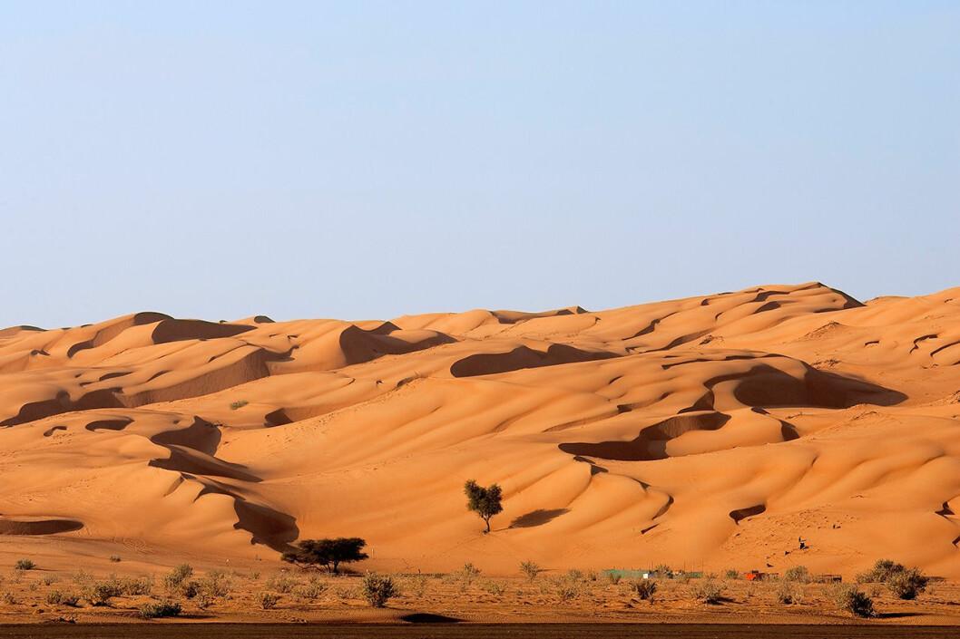 Wahiba Sands i Oman.