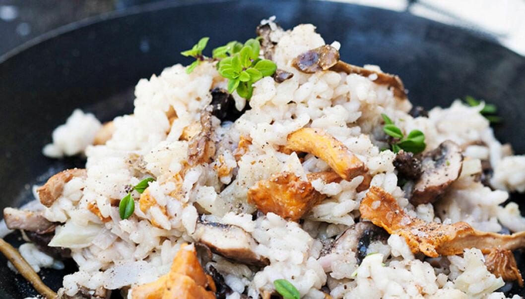 Krämig risotto med skogssvamp och parmesan