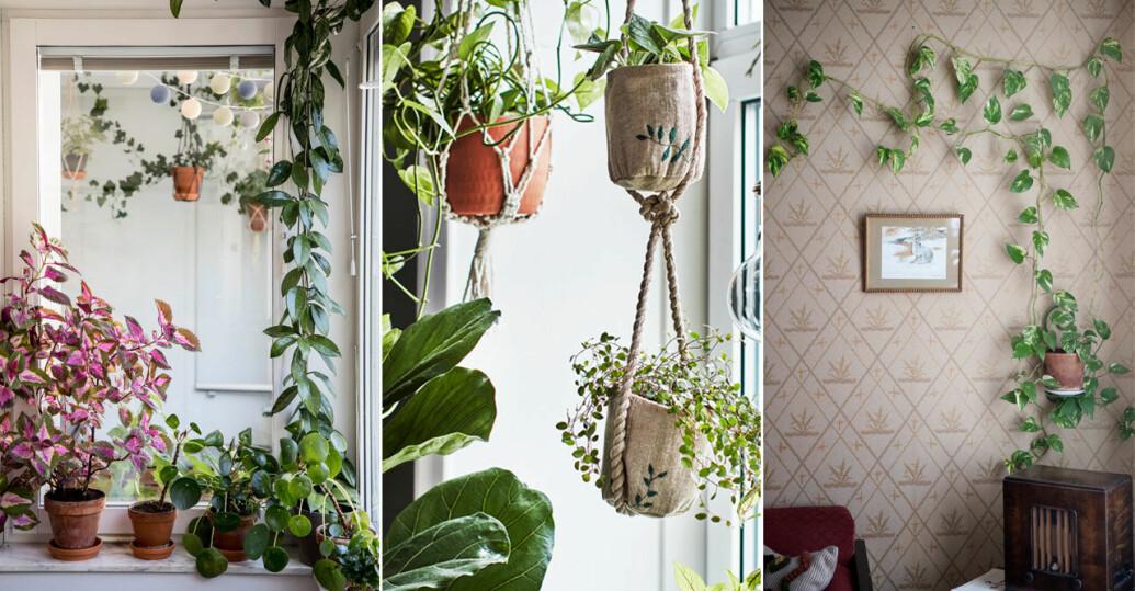 Så gör du en egen växtgardin hemma