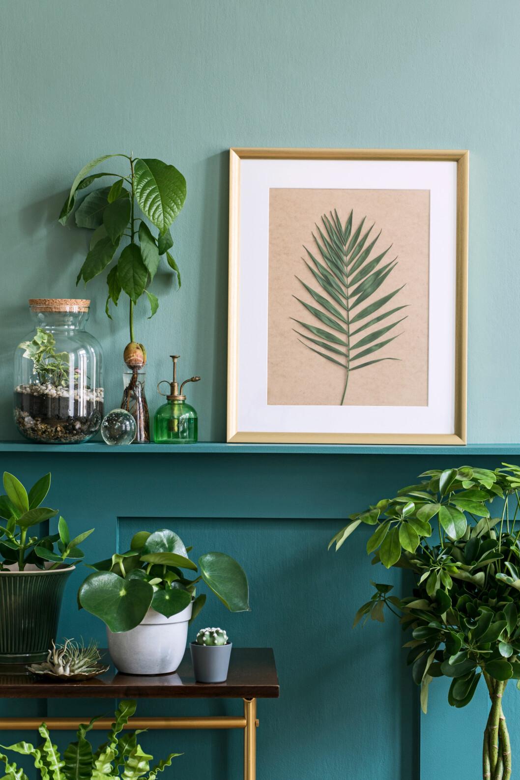 Turkos vägg med flera gröna växter