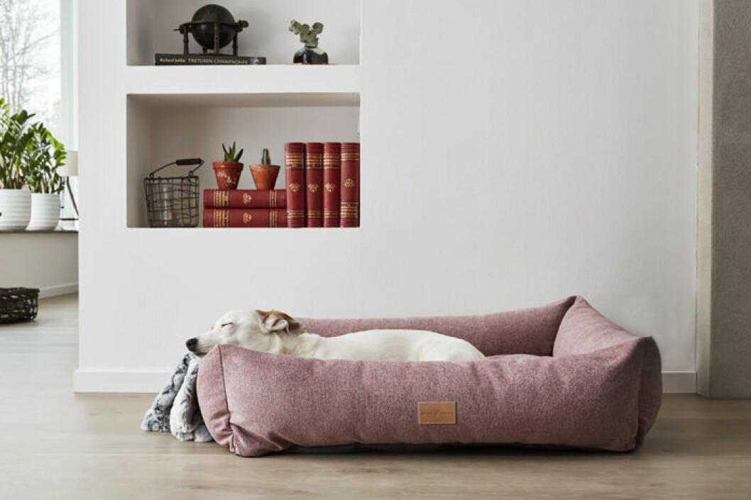 Hundbädd i rosa
