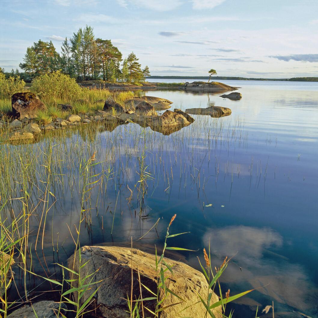 Vy över solig udde i Färnebofjärdens nationalpark